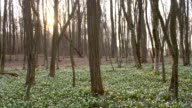 Woman running among the snowdrops video