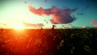 Woman running through a sun flower field at sunset video