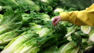 Woman selecting romaine lettuce in grocery store video