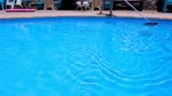 Woman Skimming Swimming Pool While A Dog Runs Around Playfully video
