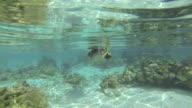 Woman snorkeling in clear blue waters over coral reef video