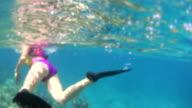 Woman Snorkeling In Ocean video