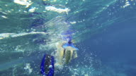 Woman Snorkeling In Red Sea video