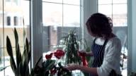 Woman spraying flowers on window video