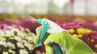 Woman spraying flowers video