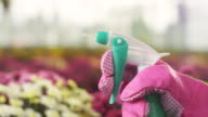 Woman spraying flowers video