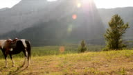 Woman stands with horse in mountain meadow video