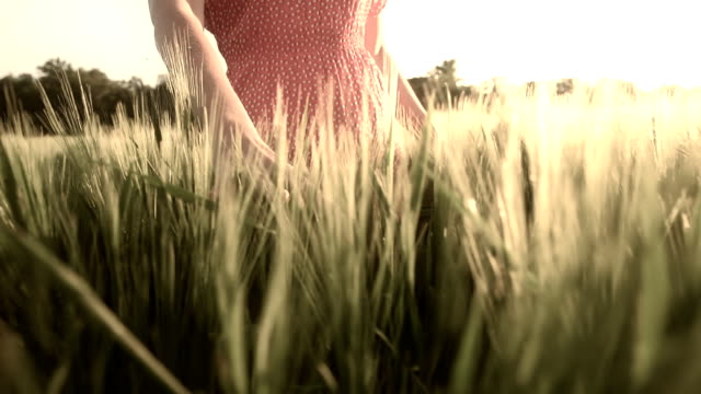 HD SUPER SLOW MO: Woman Stroking Wheat In Field video