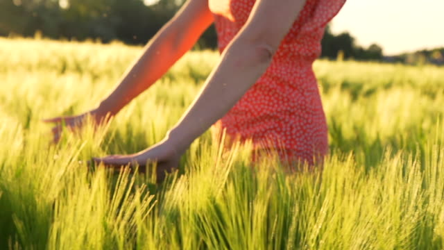 HD SUPER SLOW MO: Woman Stroking Wheat video