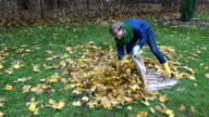 woman stuffing dry leaves into material bag sack in autumn garden. video
