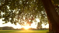 HD DOLLY SLOW MOTION: Woman Swinging At Sunset video