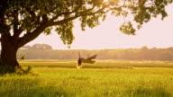SLO MO Woman swinging on tree swing at sunset video