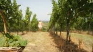 HD DOLLY: Woman Taking Basket In A Vineyard video