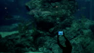 Woman taking picture of swimming shark in aquarium. Siam Ocean World, Bangkok, Thailand video