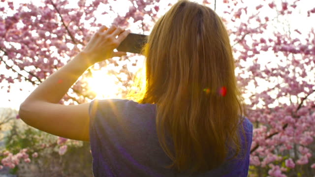Woman taking pictures of blooming cherry tree at sunset video