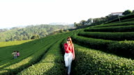 Woman talking on the phone in green tea plantation video