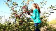 woman throws and catches apples video