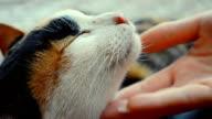 Woman tickling cat's head - Stock Video video