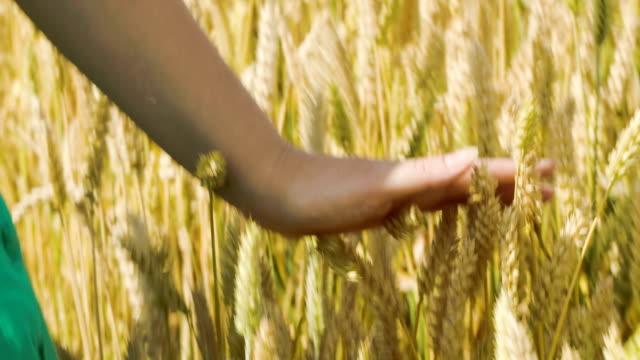 Woman touching ripe wheat video
