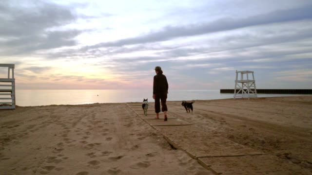 Woman walking dog on beach at sunrise. Two dogs on walk on beach video