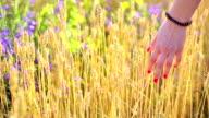 woman walking in the wheat video