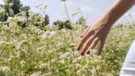 HD: Woman Walking Through Field Of Flowers video
