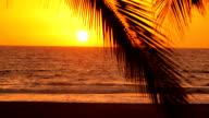 Woman walks along tropical beach at sunset video