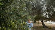 A woman walks on a plantation among olive trees video