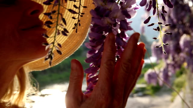 Woman walks past wisteria blossoms, pauses to enjoy perfume video
