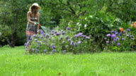 woman watering flower aster with hose sprinkler in garden video