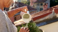 Woman waters plant on medieval rooftop terrace video