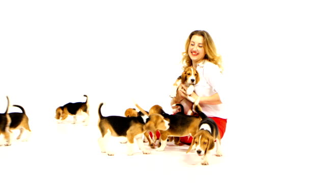 woman with cute beagle puppy on a white on studio video