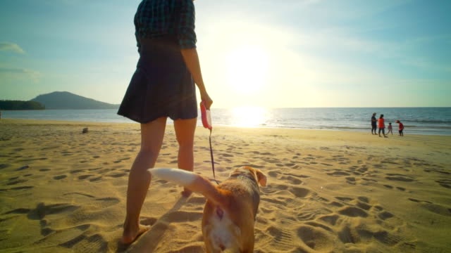 Woman with dog on the beach slow motion video