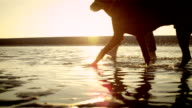 Woman with dog on the beach video