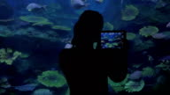 Woman with touch pad taking photos in oceanarium video