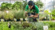 Woman working in garden center video