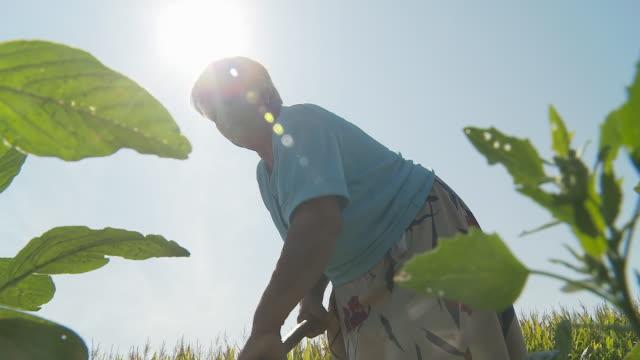 HD: Woman Working In The Field video