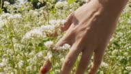 HD SLOW MOTION: Woman's Hand Caressing Flowers video