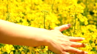 Woman's Hand Caressing Grass Summer Concept Slow Motion Background video