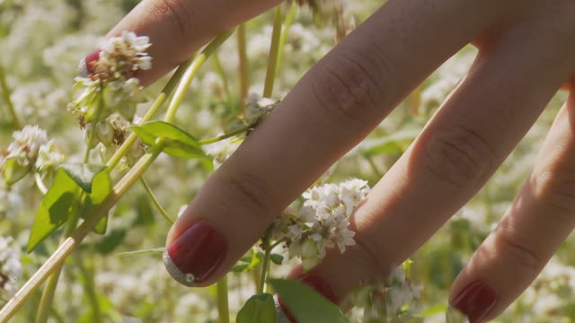 HD: Woman's Hand Caressing The White Flowers video