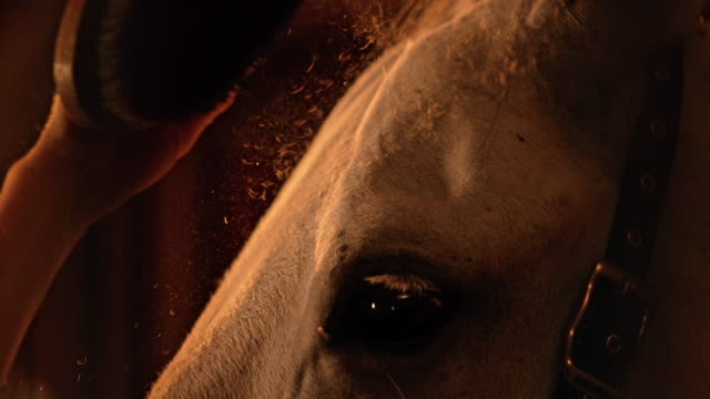 SLO MO A woman's hand grooming a white horse video