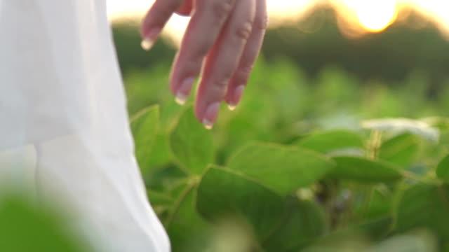 Woman's hand holding a poppy lit evening sun video