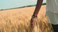 Woman's Hand Running through Wheat video