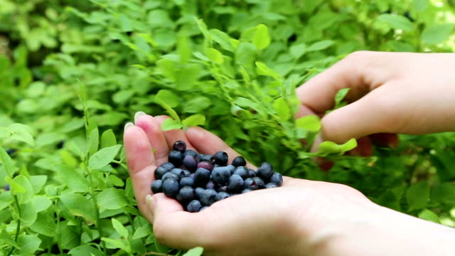 Woman's hand with blueberries video