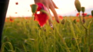 SLO MO Woman's Hands Touching Poppy Flowers video
