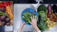 Woman's hands washing kale leaves under running water video