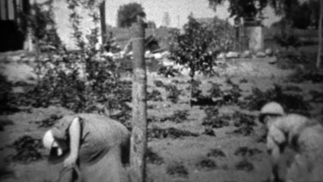 1934: Women harvesting garden during depression era food shortage. video