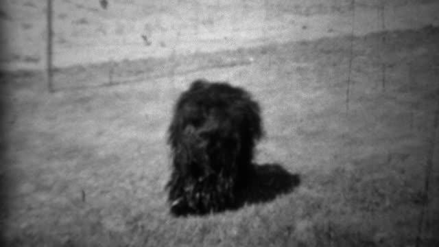 1934: Women playing fetch with family back long curly haired dog. video