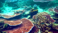 Wonderful and beautiful underwater world with corals video