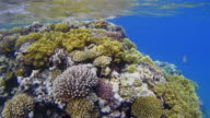 Wonderful sea life on Coral reef with lot of tropical Fish / Red Sea video
